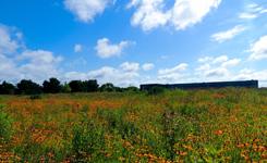 Prairie small