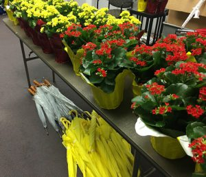 Red and yellow Kolanchoe plants, ferns, and clear and yellow umbrellas available for purchase in the Foundation.