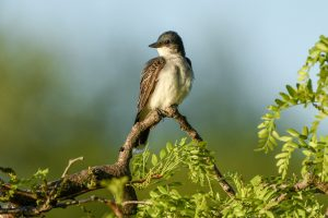 Bird perched on branch of tree